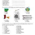 Primer B: Britanni et Galli Workbook